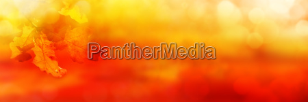 abstract orange colored autumn background