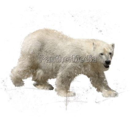 polar bear watercolor