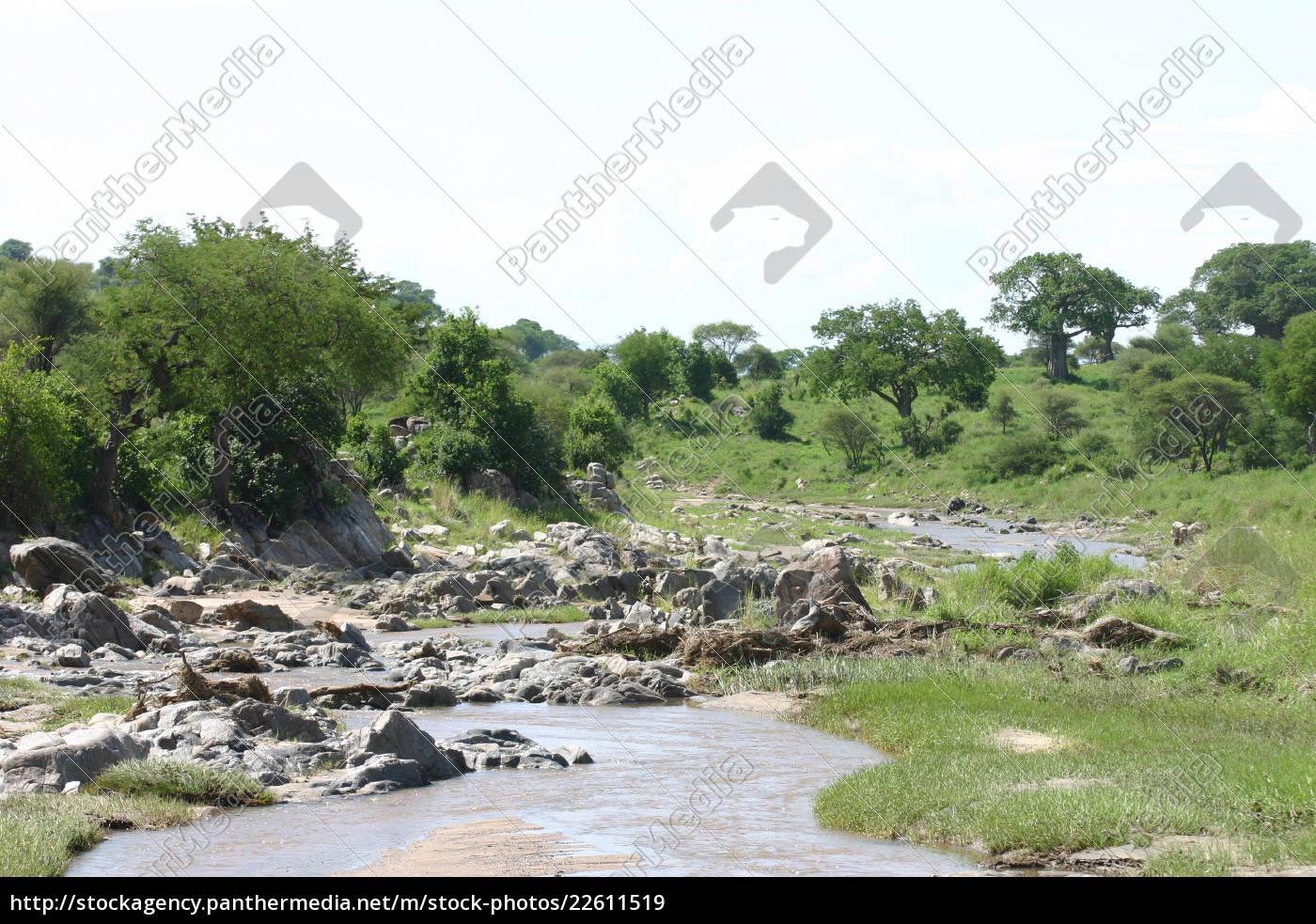afrikanische, savanne, sommer, pictrures, wilde, safari - 22611519