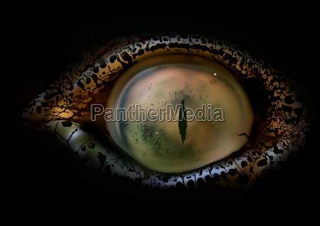 crocodile eye macro