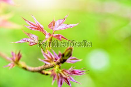 blatt baumblatt blaetter sonnenlicht springen springend