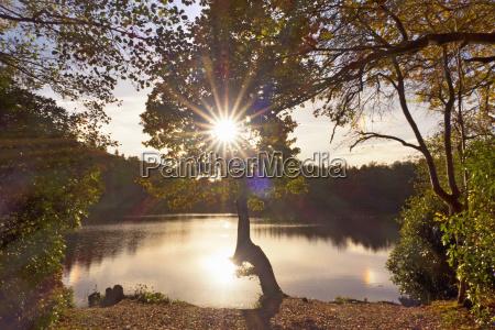 sun shining through branches of autumn