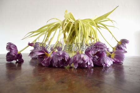stilleben blatt baumblatt farbe blume pflanze