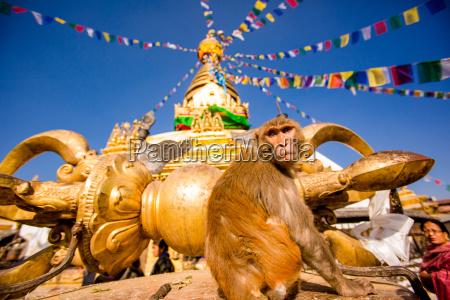 sacred monkey temple swayambhunath temple unesco