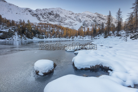 red larches frame the frozen lake