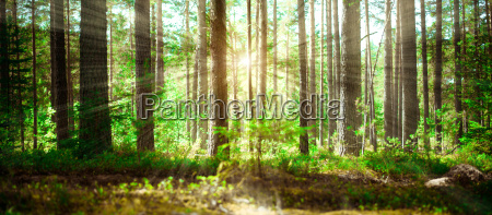 sommer gruene landschaft