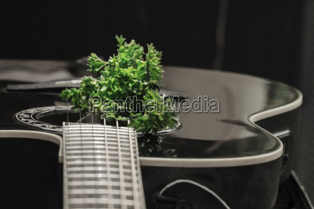 parsley with guitar