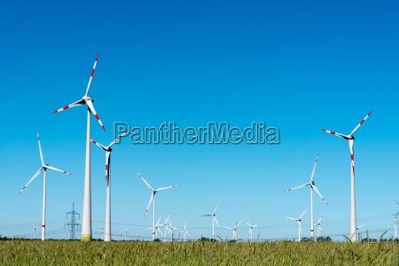 wind turbines in a cornfield in