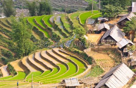 reisterrassenfelder und hmong minderheitendorf in sapa