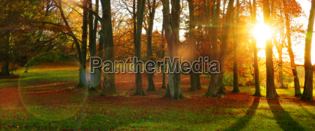 autumn sun in a forest with