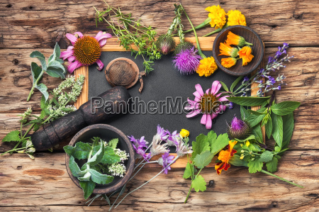 long poster with healthy herbs