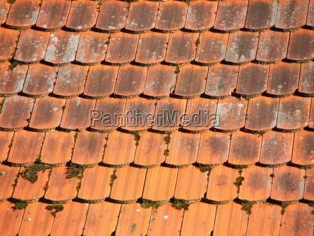 red tile roof mit alga und