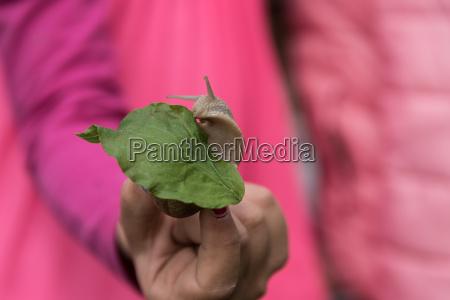 schnecke kriecht auf gruenem blatt