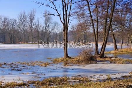 spreewald, im, winter, -, spreeforest, in - 22786609