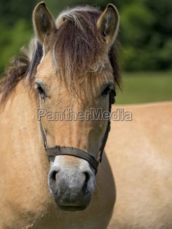 horse a portrait