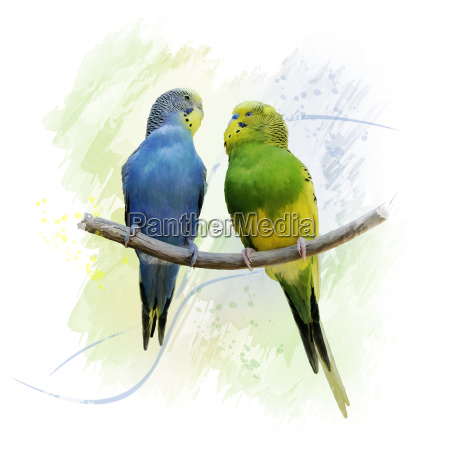 two budgerigars parrots watercolor