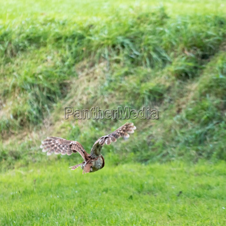 flug vogel braun braeunlich bruenett fauna