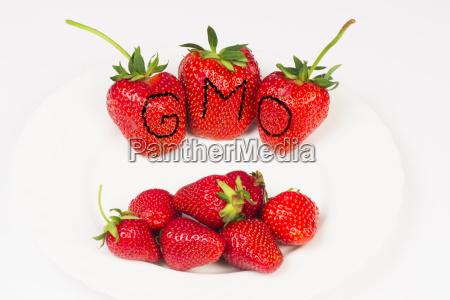 essen nahrungsmittel lebensmittel nahrung landwirtschaft ackerbau