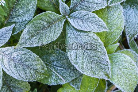 blatt baumblatt botanik usa horizontal outdoor