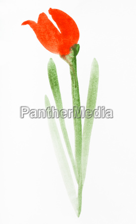 red tulip flower hand painted on