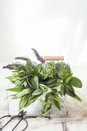 basket of variuos fresh herbs
