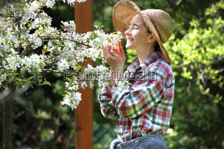 flowering apple tree spring in the