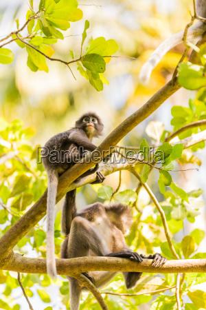 monkeys in krabi thailand southeast asia