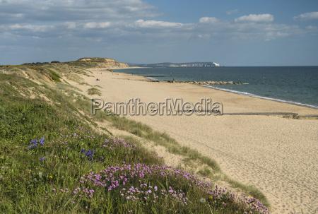 sea pinks hengistbury head beach poole