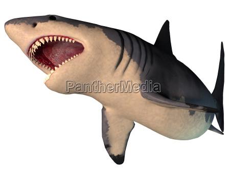 megalodon hai auf weiss