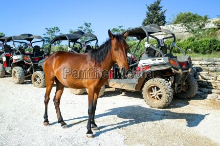 pferd auf srd huegel