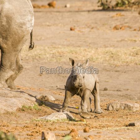spiel spielen spielend spielt afrika savanne