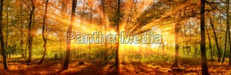 herbstlandschaft, panorama:, wald, mit, goldenen, sonnenstrahlen - 23019699