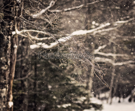 branch in forest in winter during