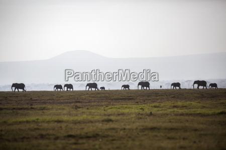 elefant kenia horizontal outdoor freiluft freiluftaktivitaet
