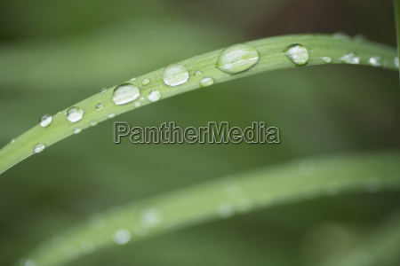 close up of raindrops on grass