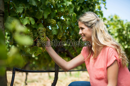 smiling woman holding grapes growing at