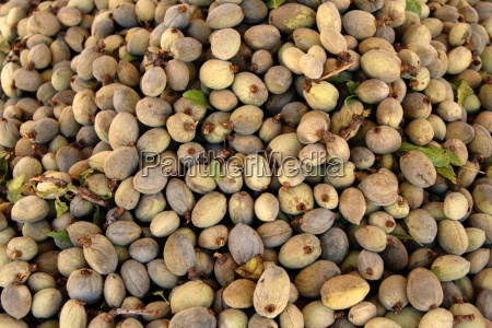 fresh almond fruit with price