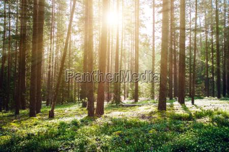 wilde, bäume, im, wald - 23085009