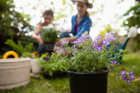 purple flowering plants with mother and