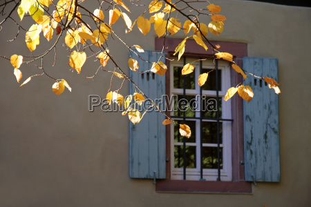 autumn leaves in front of old
