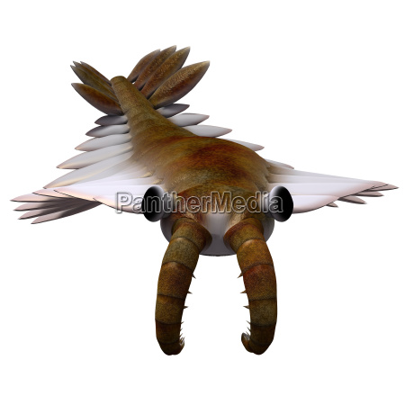 umwelt tier fisch klein duenn gering