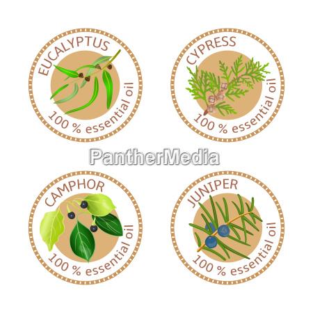 set of essential oils labels eucalyptus