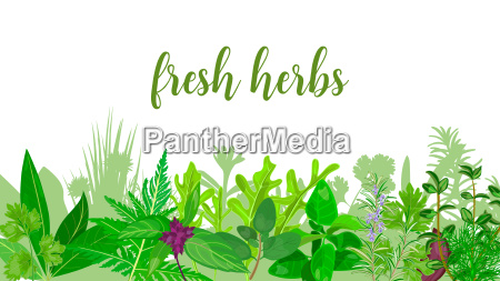 popular realistic herbs and flowers with