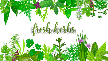 popular fresh realistic herbs and flowers
