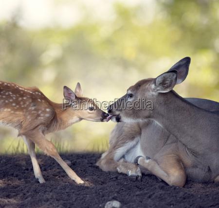 tier wildlife mutter mama mami mutti