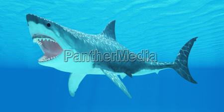 weisser hai unterwasser