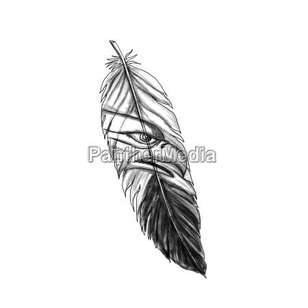 sea eagle feather tattoo