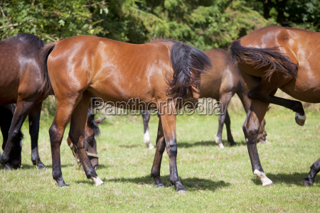 horses are stung by insects