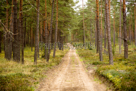 dark mysterious forest road path