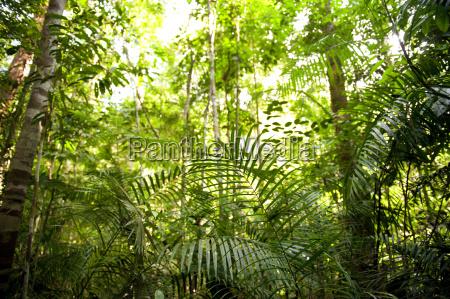 regenwaldlandschaft malaysia